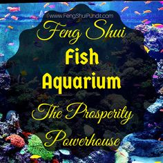 Correctly located & Feng Shui compliant fish aquarium generates lot of positive energy; here're feng shui fish tank benefits, DO's & DON'Ts