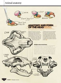 Imaginefx how-to-draw-and-paint-anatomy-2010-