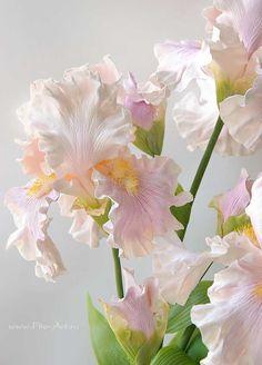 Clay handmade irises, flowers from polymer clay: Нежные ирисы. Керамическая флористика - В НАЛИЧИИ - Fito Art