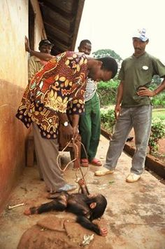 """SPEAK OUT!  POACHERS TAUNT AND BRUTALIZE AN ORPHANED BABY MONKEY...without remorse...please sign below, and share WIDELY, to get these SAVAGES out of the """"business of murder""""...and STOP the horror of the poaching of wildlife IN AFRICA...thanks, Animal Freedom Fighters..."""