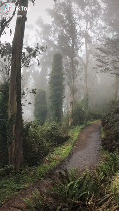 Forest Village, Rain Days, Forest Trail, Nature Aesthetic, Fantasy Landscape, Dancing In The Rain, Mother Earth, Aesthetic Wallpapers, Aesthetic Pictures