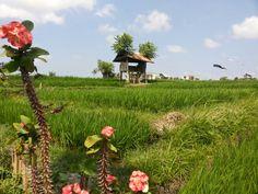 Kite watching.  Summer. Bali. Warung hotei.  Umalas 1