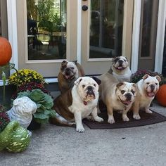 This will be what our porch of pooches looks like when we retire