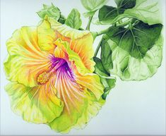 Georgia's Pearl Hibiscus colored pencil drawing by StevieRayThompson