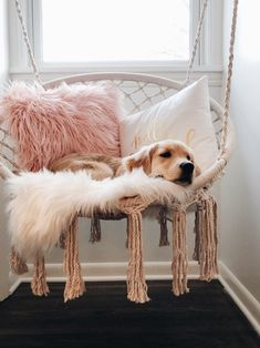 45 coole und moderne DIY Hundebett Ideen 45 coole und moderne DIY Hundebett Ideen Related posts:how I think of kels because she so smol n Stereotypes About Dog People That Are Totally True. Cute Room Ideas, Cute Room Decor, Dream Rooms, Dream Bedroom, Dog Bedroom, Bedroom Teen Girls, Girls Bedroom Ideas Teenagers, White Desk Bedroom, 1930s Bedroom