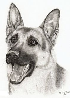 In fact, I love this!, frame for room Animal Sketches, Art Drawings Sketches, Animal Drawings, Cute Drawings, Malinois, Dog Portraits, Animal Paintings, Dog Art, Pet Birds