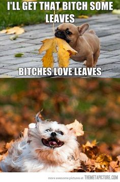 I'll get her some leaves…