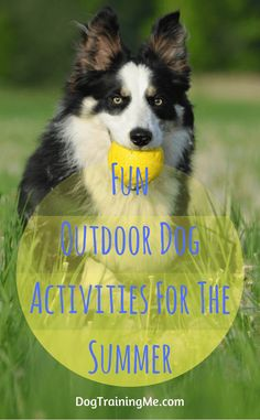 Outdoor dog activities for the summer. There are some great benefits to getting outdoors with your dog this summer. Get some exercise, teach your dog new games, and have some fun in the sun at the same time. Read our article for safety tips and advice on outdoor dog activities.