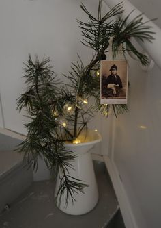 One red ornament and you have a Charlie Brown Tree! I shall recreate this! <3