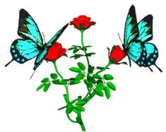 Animated Flowers and Butterflies | Rose And Butterflies Animated - roses Photo