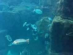 Madeira Aquarium, at Porto Moniz