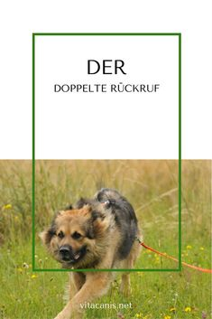 Rückruf bei großer Ablenkung You walk comfortably with your dog, suddenly he sees something in the distance and starts by. You call your dog, but [. All Dogs, Dogs And Puppies, Food Dog, Dog Games, Dibujos Cute, Call Backs, Dog Agility, Dog Training Tips, Animals And Pets