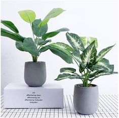 U'Artlines Artificial Plastic Mini Plants Topiary Shrubs Fake Plants with Gray Pot for Bathroom,House Decorations 2 Style). Material: This artificial greenery plant leaves are made of high quality PE plastic for easy care. Mini Plants, Faux Plants, Green Plants, Potted Plants, Indoor Plants, Plant Pots, Artificial Eucalyptus Garland, Artificial Topiary, Cheap Artificial Plants