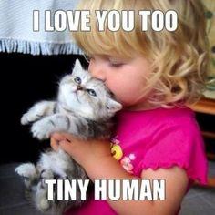 Funny cat.......again