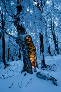 magicalnaturetour  Mysterious Forest Glow by VOJTa Herout