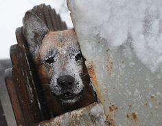 A very cold dog in Catelu, near Bucarest. 26.01.2012