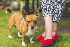 What it Means to be a Responsible Pet Owner