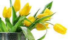 Herunterladen 1920x1080 Full HD Hintergrundbilder tulpen gelbe blätter wasser tropfen 1080p