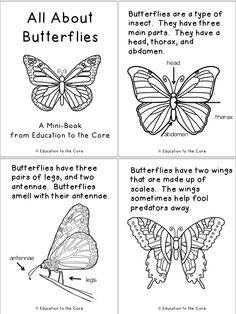 Butterfly Life Cycle Printable Book.  Great for close reads!