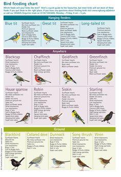 Bird food chart
