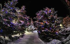 CANADA | Christmas in Whistler, British Columbia