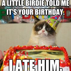 Happy Birthday! I Hope It's Terrible: 11 Grumpy Cat Pics To Brighten (Or Darken) Your Loved One's Special Day!