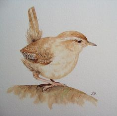 Beautiful British birds. Watercolour paintings by great new Artist ...