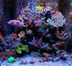 PODPIMP - 2010 Featured Nano Reefs - Featured Aquariums - Monthly Featured Nano Reef Aquarium Profiles - Nano-Reef.com Forums