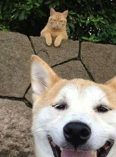 either this kitty got photo-bombed and is pissed, LOL, or the dog doesn't know he's being stalked.