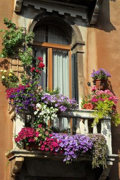 Petunien, Hänge- und Kletterpflanzen auf dem kleinen Balkon
