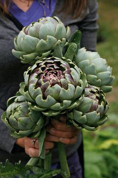 Fruit And Veg, Fruits And Vegetables, Fall Picnic, Cecile, Edible Garden, Clematis, Fruit Trees, Vegetable Garden, Herb Garden