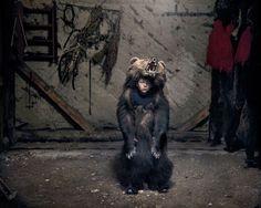 In Rumänien geht schleichend kaputt, was das Land vor der Revolution ausgemacht hat. Der Fotograf Tamas Dezso zeigt das langsame Zerbröckeln auf beeindruckenden Fotos.