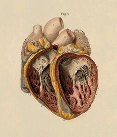 Un cuore è una ricchezza che non si vende e non si compra :si dona. Gustave Flaubert. Ascolta il tuo cuore. Esso conosce tutte le cose. Paulo Coelho. Stai ferma, in silenzio, e ascolta …