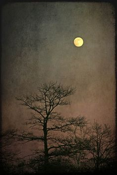landscape photography full moon nature tree by judeMcConkeyPhotos, $35.00