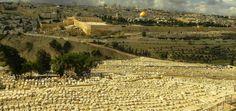 Getsemani i Dolina Cedronu. Terra Sancta – Orygenes+