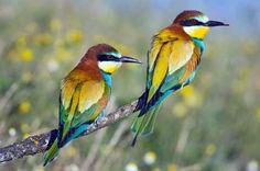 Google Image Result for http://www.dodgegrain.biz/images/content//custom_2_wild_birds1.jpg