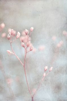 Pastel pink, grey, and white. softly by Iris Lehnhardt Soft Colors, Pastel Colors, Pastel Pink, Soft Pastels, Deco Pastel, Jolie Photo, Arte Floral, Pretty Pastel, Pink Grey