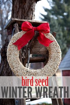 A bird seed wreath is a great winter activity with the kiddos!