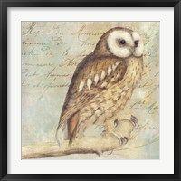 Framed White-Faced Owl