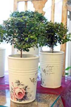 Myrsine http://holmsundsblommor.blogspot.se/2011/07/hann-inte-med.html