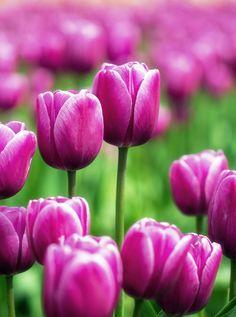 Spring by Shaurya Rastogi on 500px