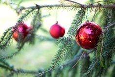 History of Christmas Trees, xmas tree and paper christmas tree Live Christmas Trees, Green Christmas, Xmas Tree, Christmas Bulbs, Spanish Christmas, Christmas Images, Christmas Carol, Outdoor Christmas, Christmas Cookies
