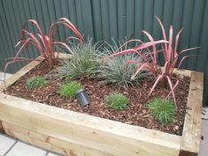 Raised Planter with pine sleepers, simple by type, simple by construction with s. Raised Planter w Plants For Raised Beds, Raised Planter, Simple Designs, Raising, Garden Design, Pine, Planters, Yard, Construction