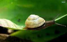 snail wallpaper - Buscar con Google