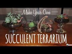 This video teaches you how to make your own succulent terrariums.