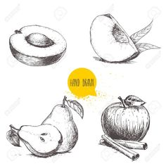 Apricot, peach quarter with leafs, whole pear and half, apple with cinnamon sticks. Vector illustration collection on white background. Cinnamon Apples, Cinnamon Sticks, Drawing Apple, Fruit Sketch, Peach Fruit, Sketch Art, Free Photos, Hand Drawn, Photo Art