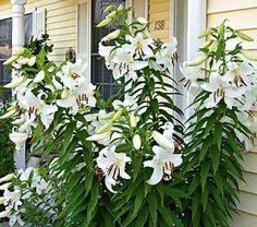 I wish I could pin a fragrance. Casablanca Lilies were my wedding bouquet & I love love love them!
