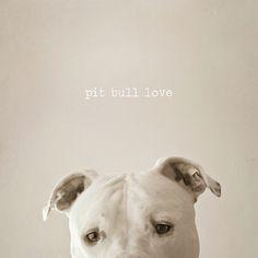 Pit Bull Love...   #pitbulllove #pitbulls