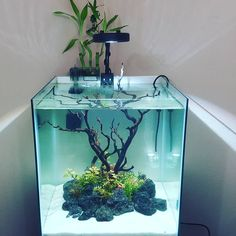 "770 Likes, 17 Comments - AQUAPROS (Mike) (@diyaquapros) on Instagram: ""New Island tank setup video is live! Can you guess whats goin in it??? . #islandaquarium…"""