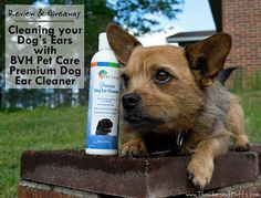 Review & Giveaway: Cleaning your Dog's Ears with BVH Pet Care Premium Dog Ear Cleaner #Sponsored